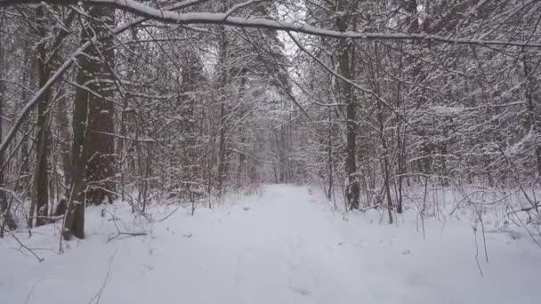 Séta a gyönyörű téli erdőben, friss hóval.