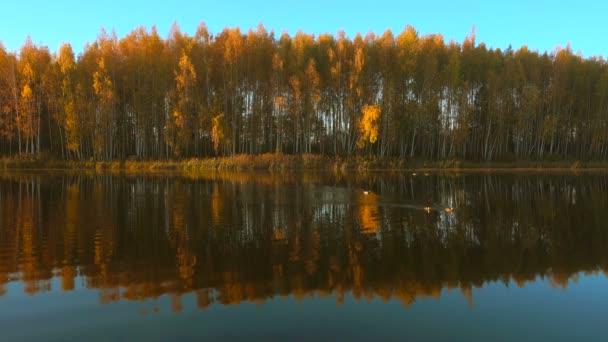 Erdei tó napkeltekor, kacsák úsznak vízben.
