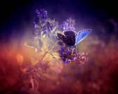Gyönyörű virágok sötét háttérrel