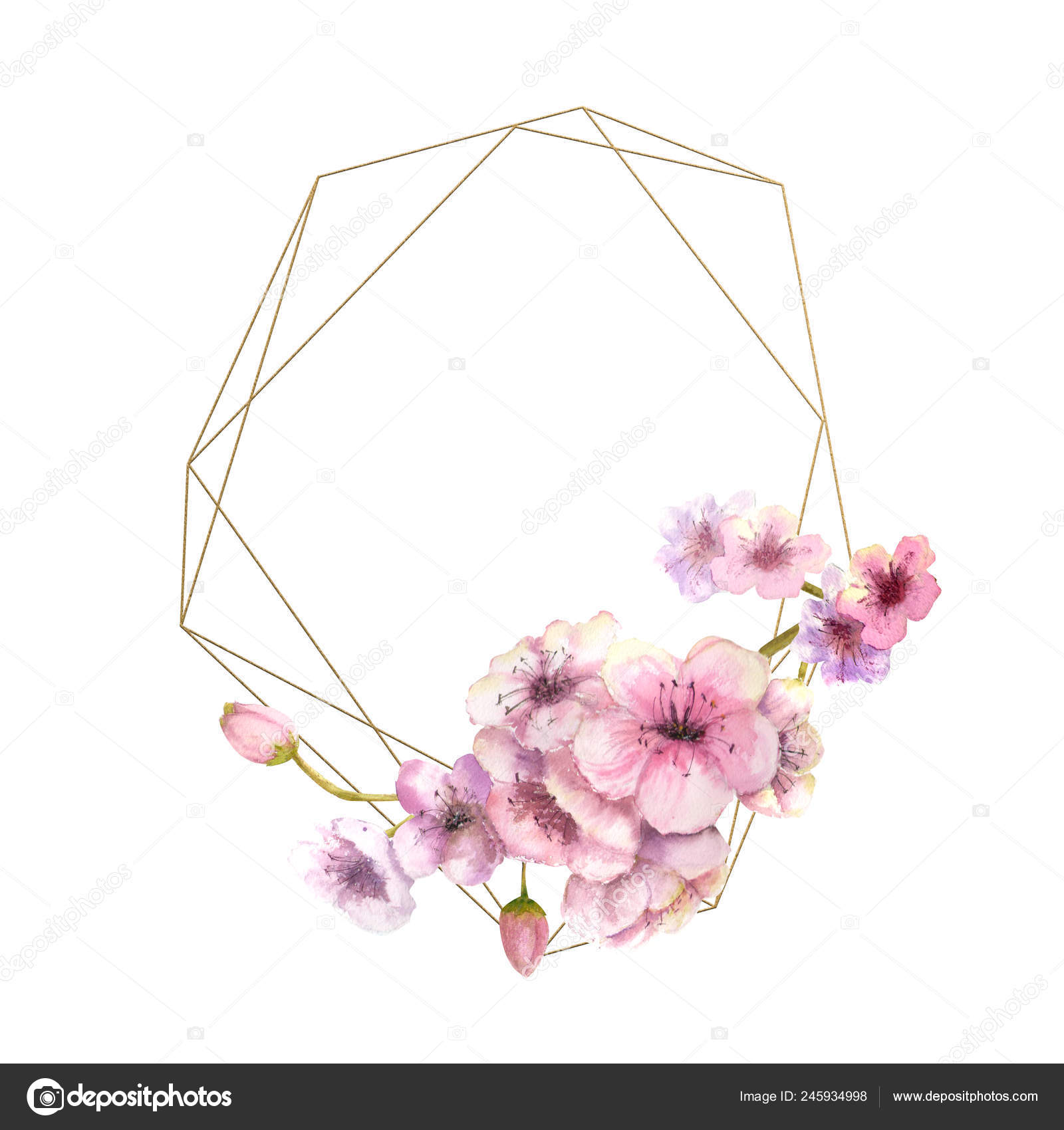 Cherry Blossom Sakura Branch Pink Flowers Gold Frame Isolated White Stock Photo Image By C Natika26042002 Gmail Com 245934998