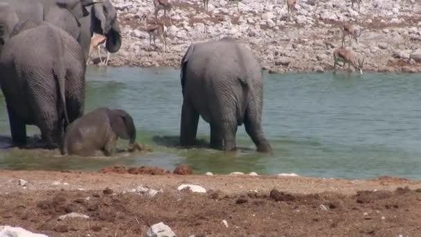 Elefánt család kis Baby elefánt fürdés az Okaukuejo Waterhole, Etosha Nemzeti Park, Namíbia, Afrika