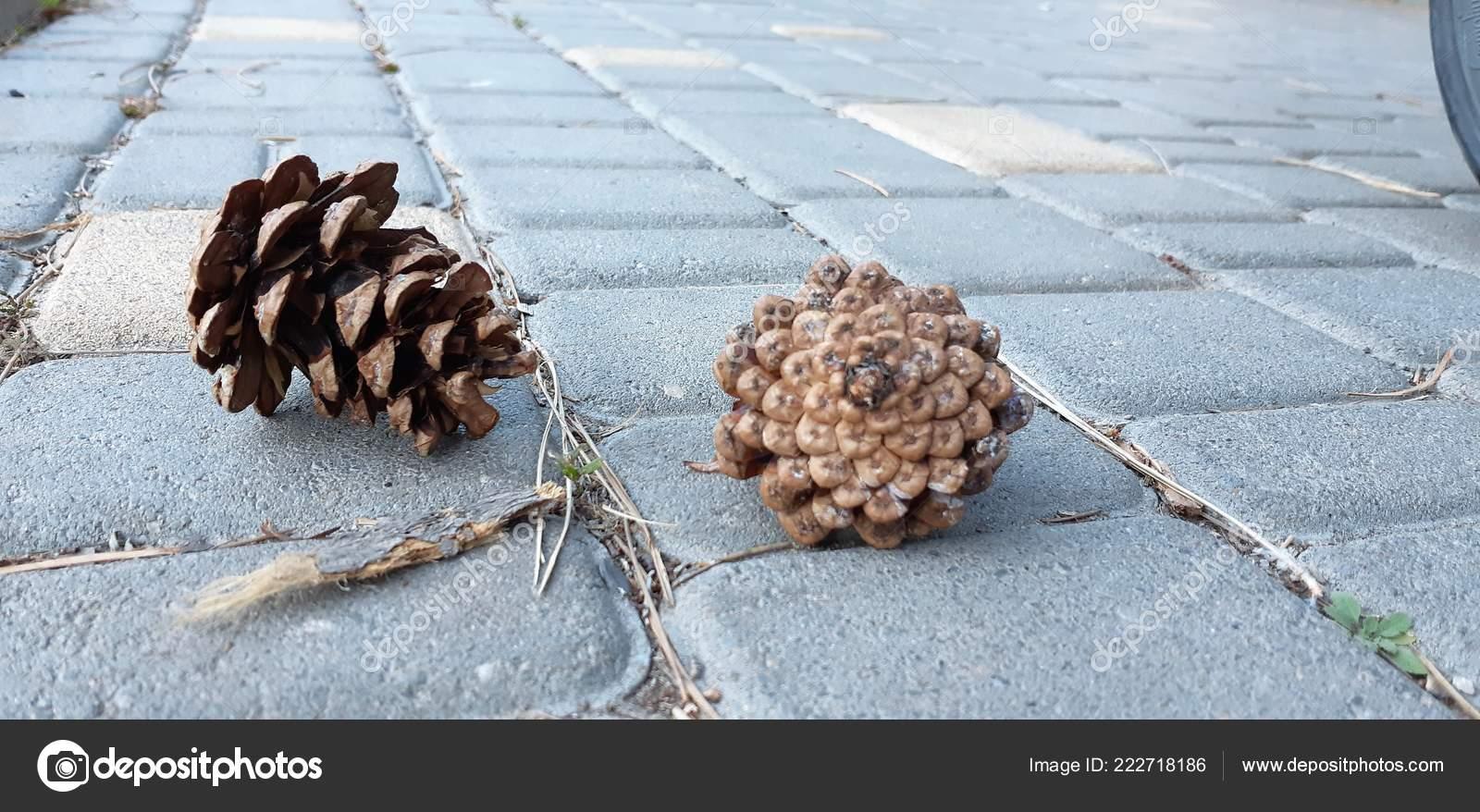 Pine bumps lie on the ground  — Stock Photo © eelenka0310