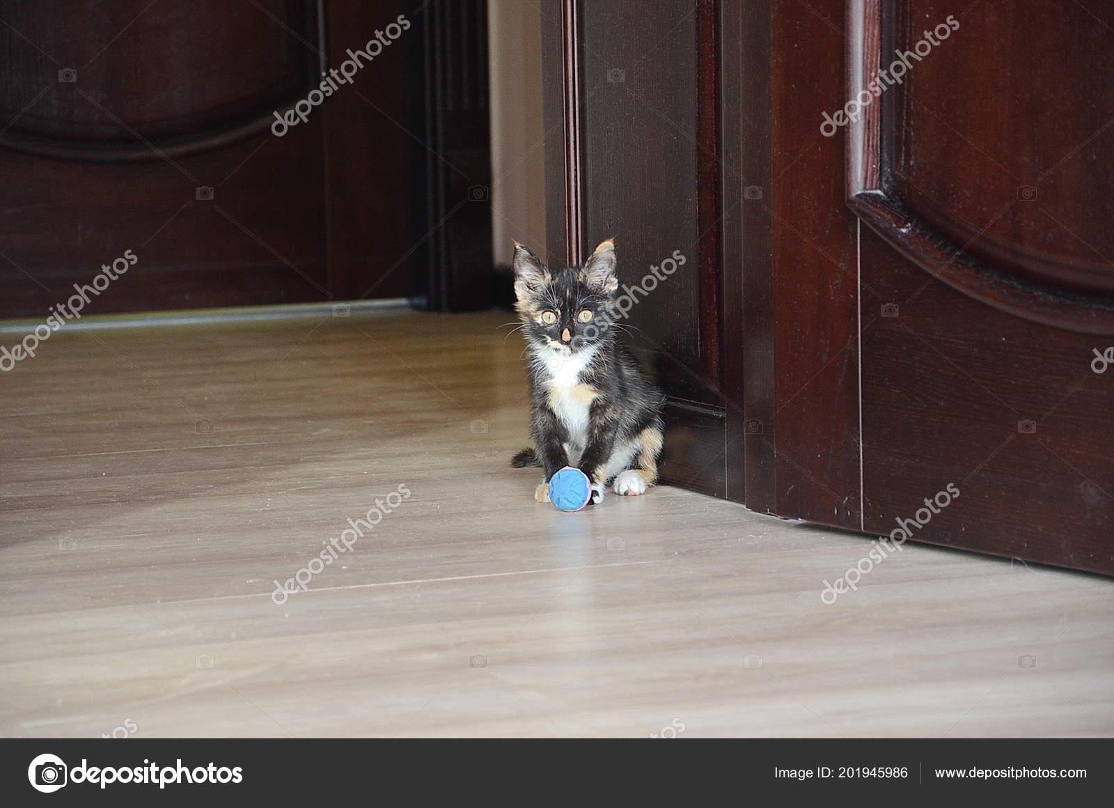 fotky malých kočiček