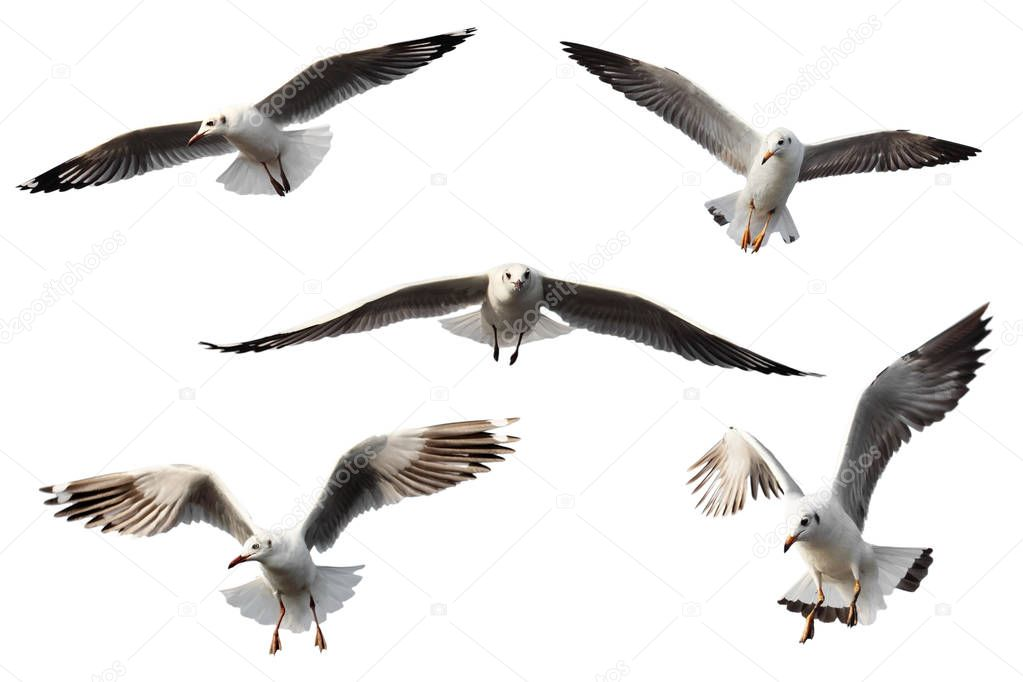 set of seagulls.