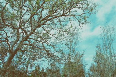 tree branch abstract with blue sky background - vintage style