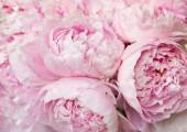 Fotografie Pink peonies blossom background. Flowers