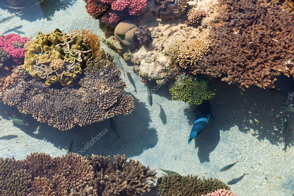 Colored corals and small fish in Eilat