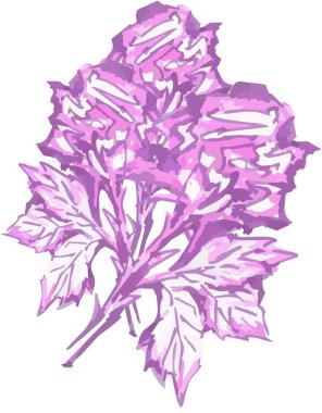 Bouquet of purple roses for holidays and events Abstract watercolor violet roses on a white backdrop for your romantic dates