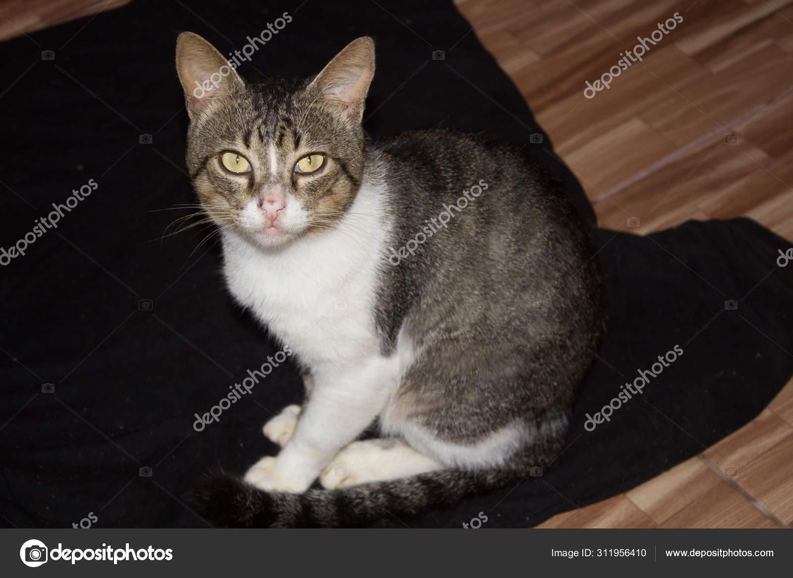 Portrait Chat Drole Raye Photographie Jessehr C 311956410