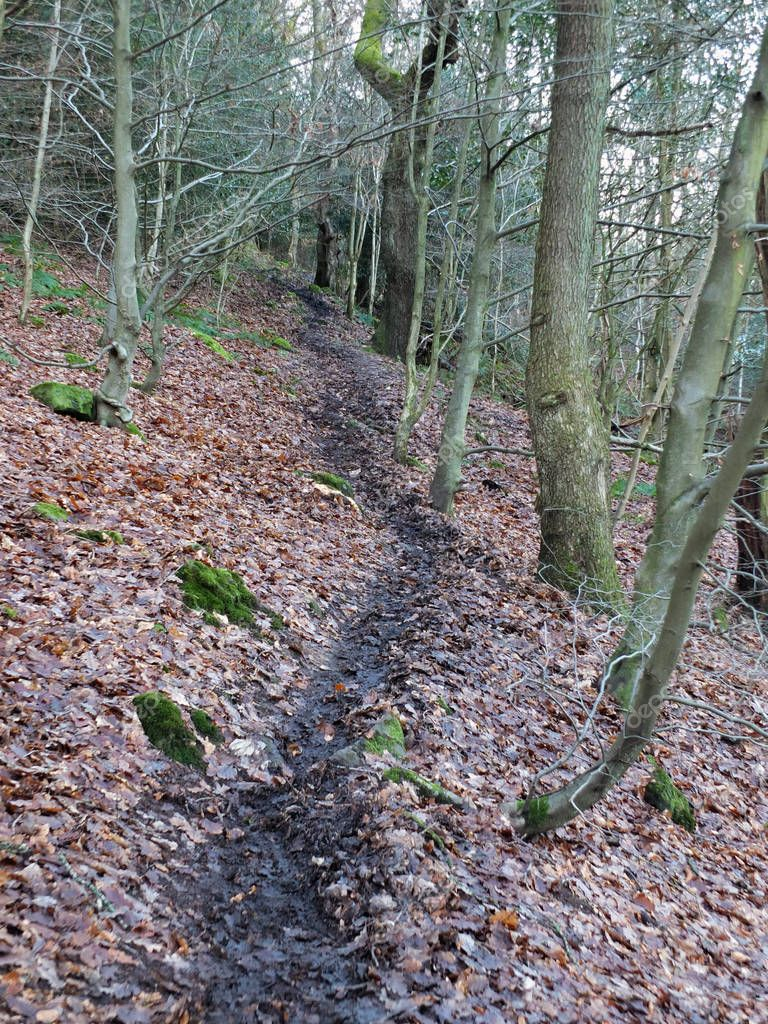 black winding winter forest pathway on a hillside on a dark winters day with dense woodland background