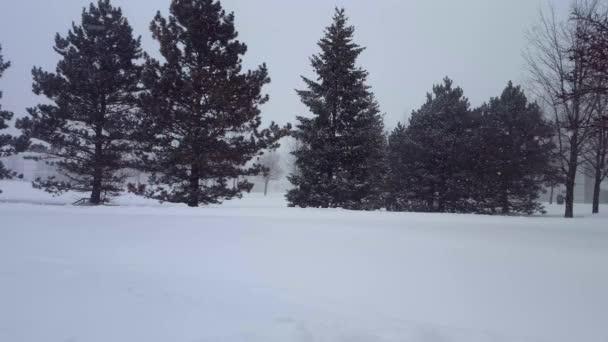 Snow Storm Blizzard, örökzöld fák. Hull a hó természet jelenet fa a területen. Havas Észak Időjárás festői táj.