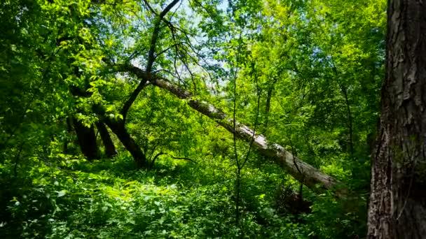 Pohled na zelený lesní interiér ve dne Bujné stromy, rostliny a listí pod zalesněná klenba