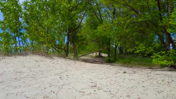 Beautiful Beach Shore With Lush Green Trees During Summer Day.  Sand Shoreline With Scenic Green Nature Foliage.