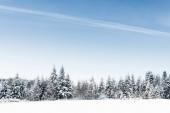 Fotografie malerische Aussicht mit klar, blauer Himmel und schneebedeckte Bäume in Karpaten
