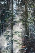 Les v Karpatech s slunce skrze větve stromů, zelená