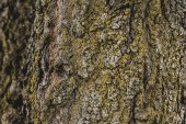 close up of textured tree bark covered with moss