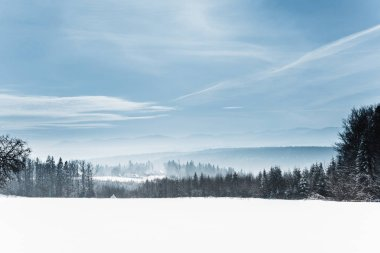 landscape with snowy white carpathian mountains and trees in winter