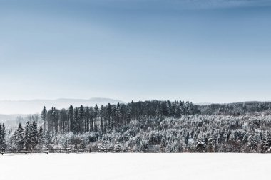 landscape with forest and carpathian mountains covered with snow