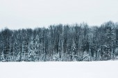 landscape of carpathian mountains with white snow, clear sky and trees