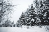 Fotografie Straße in Karpaten bedeckt mit Schnee unter Fichten