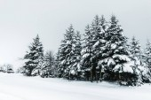 Photo road in carpathian mountains covered with snow among spruces