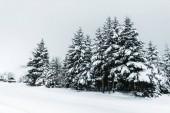 silnice v Karpatských hor pokryté sněhem mezi smrky