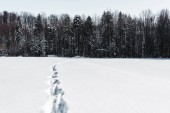 Fotografie trees in winter forest with footprints on snow in carpathian mountains