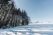 vysoké suché stromy v Karpatských horách se stíny na sněhu