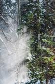 Les s slunce prostřednictvím zelené větve a sníh