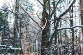 suché větve pokryté sněhem v zimě