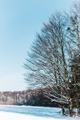 dry trees in carpathian mountains with shadows on snow