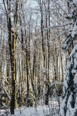 Fotografie trees covered with snow in winter forest at daytime