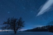 Fotografie starry dark sky and tree in carpathian mountains at night in winter