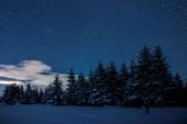hvězdnou tmavá obloha a smrky v Karpatských horách v noci v zimě
