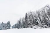 Fotografie malebný pohled na Karpaty a stromy pokryté sněhem