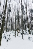 Fotografie low angle view of tree trunks in snowy forest