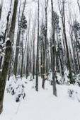 Fotografie niedrigen Winkel Ansicht von Baumstämmen im verschneiten Wald