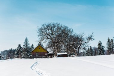 small village in carpathian mountains near forest with traces on snow