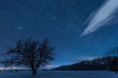 starry dark sky and tree in carpathian mountains at night in winter