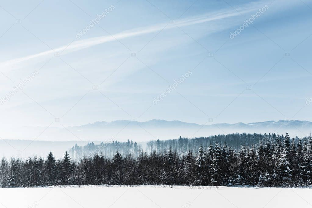 Фотообои blue cloudy sky with sunshine and winter snowy mountain forest in carpathians