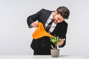 businessman in suit watering plant with money isolated on grey
