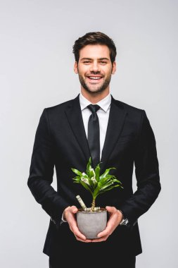 Smiling handsome businessman in suit holding flowerpot with money isolated on grey stock vector