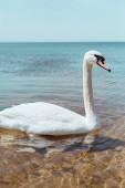 weißer Schwan schwimmt an sonnigem Tag auf blauem Fluss