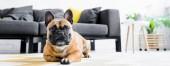 panoráma szemcsésedik-ból ravasz Francia Bulldog fektetés-ra emelet-ban nappali