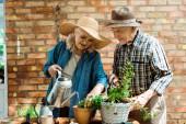 Seniorin in Strohhut wässern grüne Pflanzen in der Nähe von Ehemann