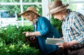 selective focus of senior woman pointing with finger at green plants near husband