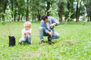 father digging with shovel near son for planting seedling in park