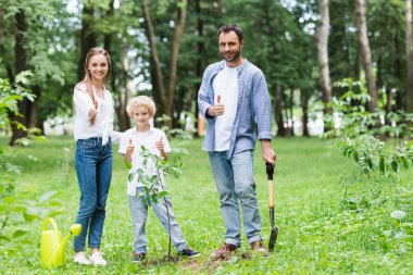 happy family showing thumbs up during planting seedlings in park