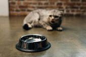 selective focus of metal bowl near scottish fold cat on floor
