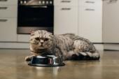 Fotografie adorable scottish fold cat near bowl on floor in kitchen